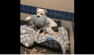Все, что осталось у этой собаки от былой жизни — игрушечный слон