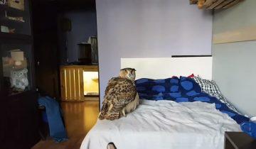 6 минут из жизни совы Елки: путешествие по комнате и соседство с котом