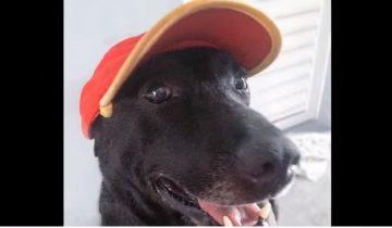 Брошенная собака была взята на работу на заправочную станцию