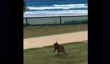 Неловкий кульбит собаки стал хитом интернета