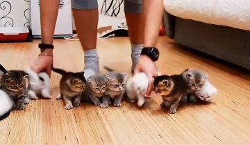 Легко ли построить 10 маленьких котят