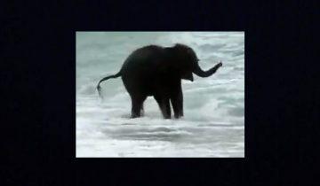 Этот слоненок впервые увидел море