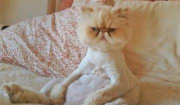 Почему с котами утро скучным не бывает