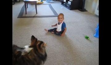 Малыш смеется и не может остановиться: собака веселит карапуза