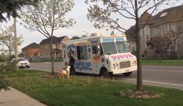 Питбуль-сладкоежка занял очередь за мороженым