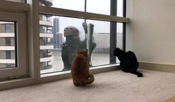 Вот оно — любимое кошачье развлечение!