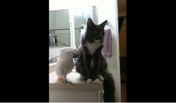 Если попугай решил добиться внимания кота, его не остановить