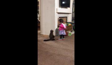 Милая обезьянка просит девочку: «Обними меня!»
