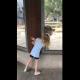 Девочка играет с медведем через стекло