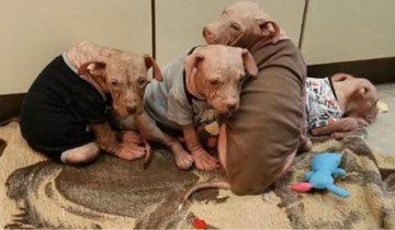Когда этих щенков нашли, они были полностью лысыми и горели от жара…