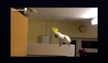 Попугаи зажигают: какие талантливые танцоры