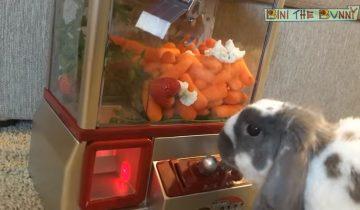 Такого вы еще не видели: кролик-игроман