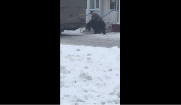 Мужчина ловко оседлал медведя и стал героем интернета