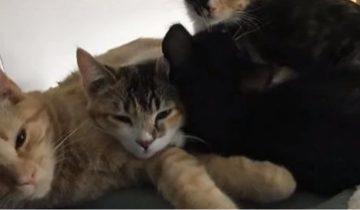 Спасенный котенок стал работать в ветеринарной клинике
