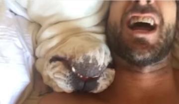 Этот пес при пробуждении издает невероятно смешные звуки