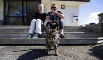 Новозеландский кот жил на две семьи: как его разоблачили