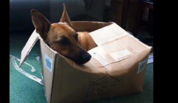 Что будет, если коты и собаки поменяются местами?