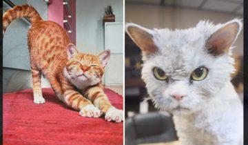 12 особенностей жизни с котом: ожидание и реальность