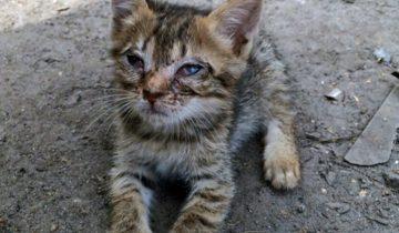 Этого котенка просто вышвырнули в кусты…