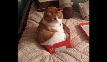 Не бывает на свете коробки, куда не поместился бы кот