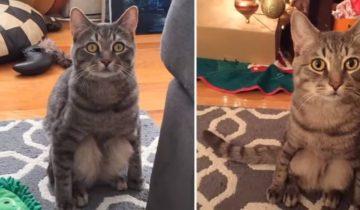 Пара взяла в дом кошку из приюта, не подозревая о ее способностях