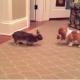 Милый щенок весело играет с кроликом