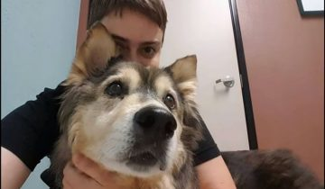 Узнав, что ее собака скоро умрет, хозяйка воплотила последнюю мечту питомца