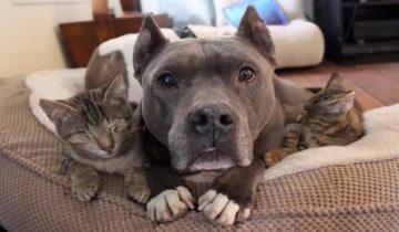 Когда слепые кошки попали в приют, их адаптации помогли два питбуля