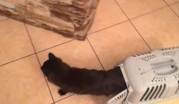 Кот переехал в новый дом: смотрим реакцию питомца