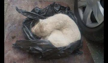 Эту собаку нашли избитой в мусорном мешке…