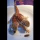 Ничего особенного: просто двухголовая ящерица завтракает