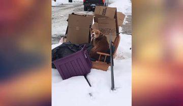 Питбуля выбросили на мусорную кучу в морозный день…