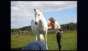 Конь так доверчиво ждал, когда ему надуют шарик…