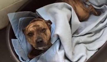 Эта собака из приюта считалась самой одинокой в мире