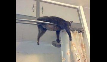 Коты в самых неожиданных местах и позах