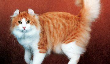 Выбор кошки… по знаку Зодиака