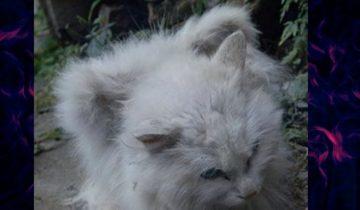Крылатые кошки: что это за чудо?