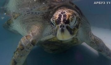 Эта черепаха чуть не погибла из-за туристов