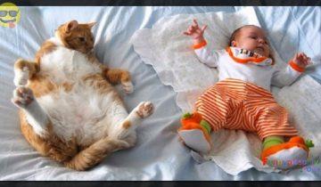 Все коты были в прошлой жизни людьми?! Забавные моменты