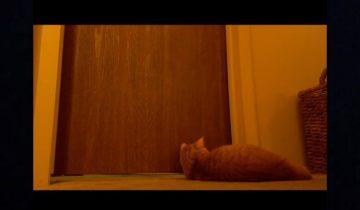 Что этот кот вытворяет, чтоб разбудить хозяев!