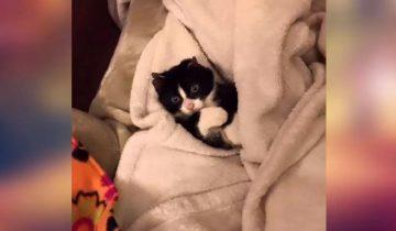 Крошечный котенок пережил страшное: ему сожгли ушки