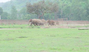 В парк слонов прибыло пополнение — сиротка-слоненок
