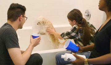 Им предложили искупать в первый раз в жизни совершенно чужую собаку