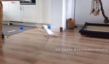 Что нужно попугаю для веселья?