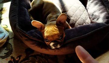 Хорошенькие собачки говорят и спорят с владельцами: 1,1 млн просмотров
