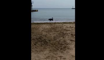 У собаки истерика: она не хочет уходить с пляжа