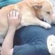 Хозяин этого пса упал с большой высоты: питомец не отходил ни на шаг
