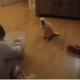 Малыш и какаду: как они поладят?