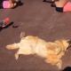 Пес вовсю готовится к летнему сезону: 3 млн просмотров
