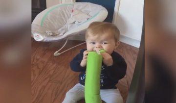 Ребенок увлеченно грызет игрушку и тут узнает, что она для собаки